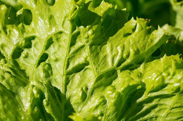 list salátu detail