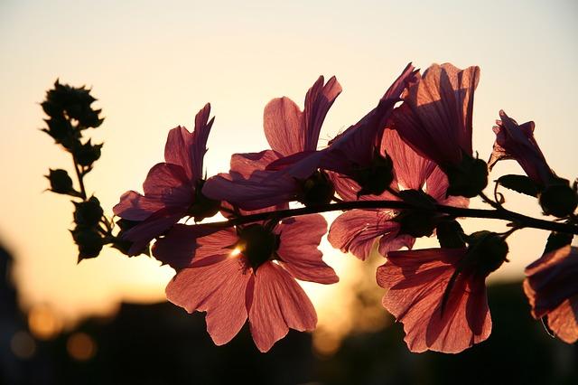 květy na slunci