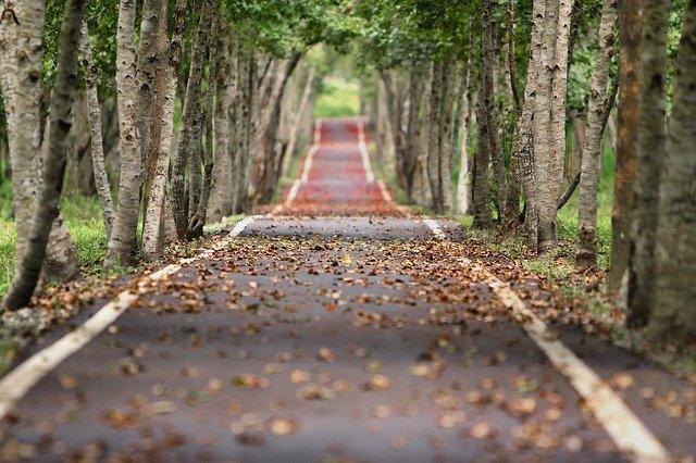 alej na podzim